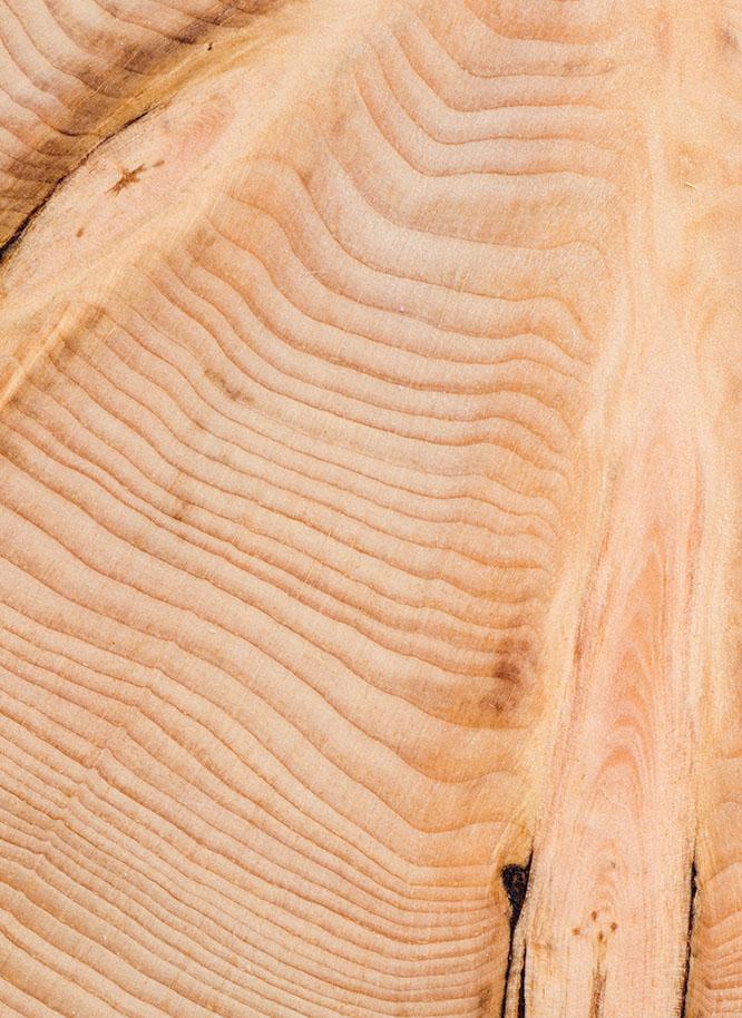 Nahaufnahme der Holzstruktur der Zirbelkiefer aus dem Sortiment von Holz Gar in Aumühle südlich von München.
