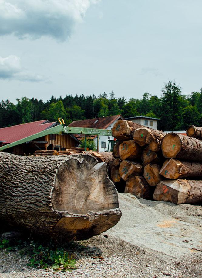 Gelagerte Baumstämme auf dem Gelände von Holz Gar in Aumühle südlich von München.
